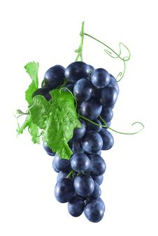 Free Bunch Of Ripe Grapes With Blue Green Leaves Stock Photography - 16049562