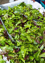 Free Organic Salad Mix Royalty Free Stock Photography - 16058867