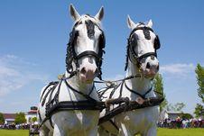 Free Horse Heads Stock Photos - 16050313