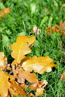 Free Autumn Stock Images - 16050534