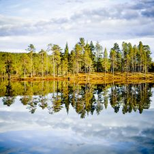 Free Forest Reflection Royalty Free Stock Image - 16050696