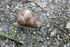 Free Snail Royalty Free Stock Photography - 16053217