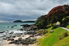 Free Coastal Walk At Manganui, Bay Of Plenty, New Zeala Royalty Free Stock Photos - 16053258