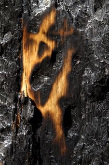 Free Burnt Forest Stock Photo - 16053260