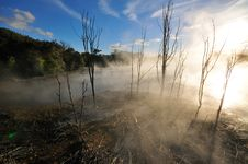 Free Thermal Lake In The Kuirau Park In Rotorua Royalty Free Stock Photography - 16053427