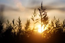 Free Sunset Over Sedge Stock Photo - 16054970