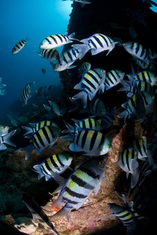 Free Large Shoal Of Tropical Fish Stock Image - 16056201
