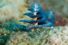 Christmas Tree Worm Stock Photos