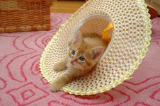 Free Kitten Hat Stock Photos - 16056513