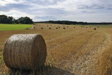 Free Rolls Of Straw Royalty Free Stock Photography - 16056557