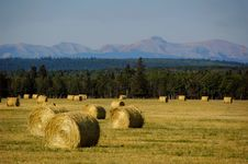 Free Ranchland Bails Royalty Free Stock Photos - 16056818