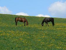 Free Horses Stock Photo - 16057580