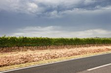 Free Vineyards Near The Road Royalty Free Stock Photography - 16058257