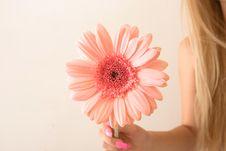 Free Pink Flower Stock Image - 16059381
