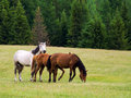 Free Horses Royalty Free Stock Photography - 16064667
