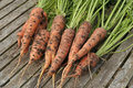 Free Freshly Dug Out Organic Carrots On Garden Table Stock Photos - 16069343