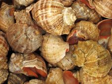 Background With Set Of Seashells Stock Images
