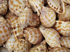 Background With Set Of Seashells Royalty Free Stock Image