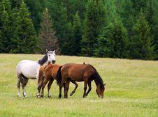 Free Horses Royalty Free Stock Photography - 16064667