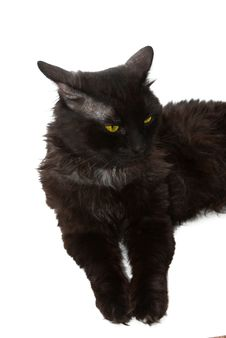 Free Black Cat Stock Photos - 16064703