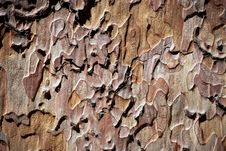 Free Cortex Brown Texture Stock Photos - 16068093