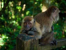 Free Monkeys In The Jungle Stock Photography - 16068582
