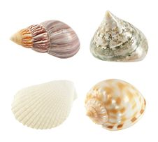 Free Seashells Stock Photo - 16068810