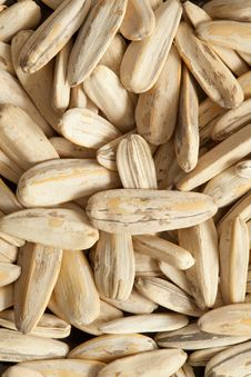 Free Sunflower Seeds Closeup Royalty Free Stock Image - 16069306