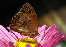 Free Butterfly Stock Photo - 16069400