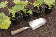 Free Vegetable Seedlings  Growing Pots Stock Photos - 16069483