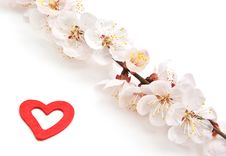 Free Heart And Sakura. Royalty Free Stock Image - 16071416