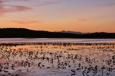 Free Sunset On Lilly Pad Lake Stock Photography - 16073142