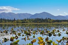 Free Lilly Pad Lake Stock Photography - 16073282
