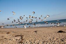Free Birds Stock Photography - 16073302