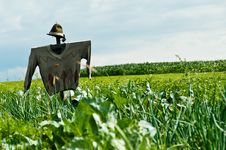 Free Scarecrow On A Field Royalty Free Stock Photo - 16073495