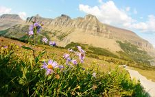 Free Alpine Flowers At Garden Wall Royalty Free Stock Photos - 16074448