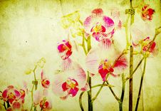 Free Orchid Royalty Free Stock Photography - 16075837