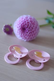 Baby S Pacifier And Pink Flower Royalty Free Stock Photography
