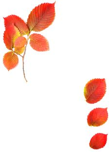 Free Autumn Leaves Frame For Your Text Stock Photography - 16076952
