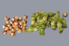 Free Nuts (hazels) Royalty Free Stock Photo - 16077565