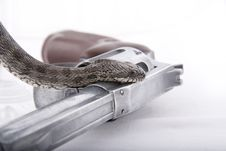 Free The Snake On A Handgun Stock Photo - 16078040