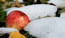 Apple And The Snow Stock Photo