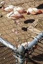 Free Animal Rights Stock Image - 16082501