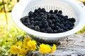 Free Blackberries Stock Image - 16083681