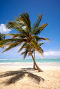 Free Tropical Beach Royalty Free Stock Photos - 16089618
