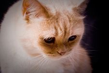 Free The Pensive Cat Royalty Free Stock Image - 16080346
