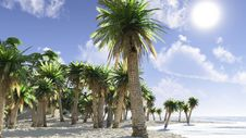 Tropical Coast Stock Photo