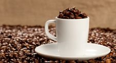 Free Espresso Royalty Free Stock Photography - 16081757