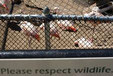 Free Animal Cruelty Stock Photos - 16082483