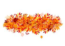 Free Autumn Leaves Background Stock Images - 16082714